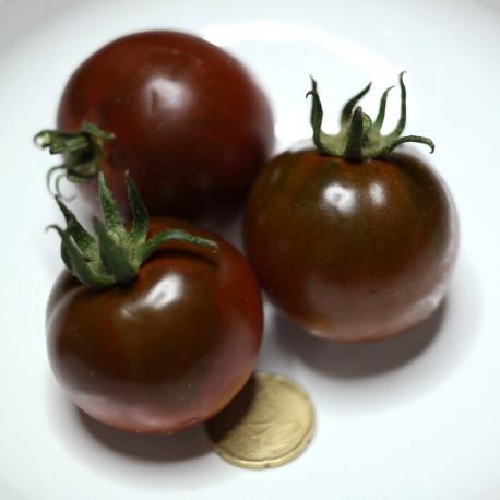 Pomodoro Nero (30 semi) - pomodorino black