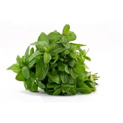 Mentuccia Romana (50 semi) - menta spicata