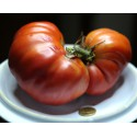 Pomodoro costoluto gigante  (30 semi) - Semi di Pomodori