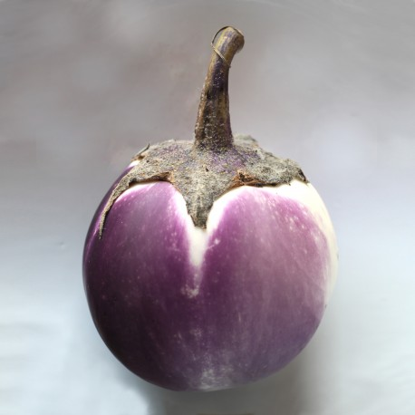 Melanzana Bianca sfumata viola (10 semi)