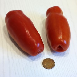 Pomodoro San Marzano  (20 semi) - Pomodori