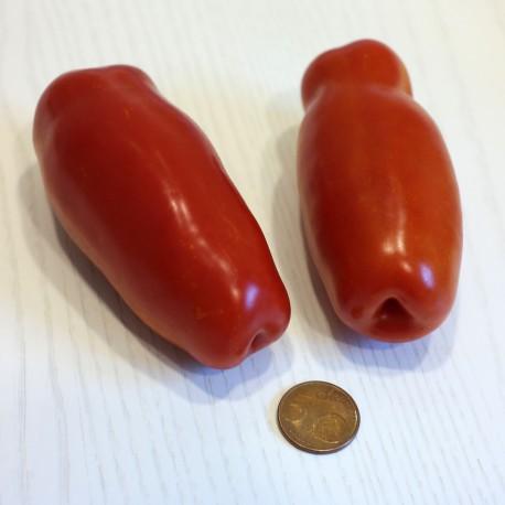 Pomodoro San Marzano  (30 semi) - Pomodori