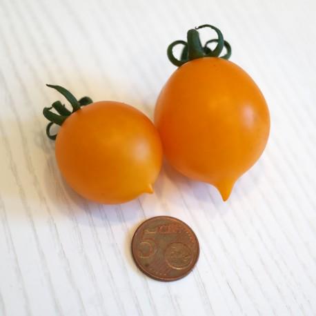 Pomodoro del Piennolo Giallo (30 semi) - pomodorino piennolo pendolo