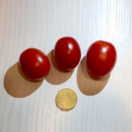 Pomodoro lampadina  (30 semi) - pomodorino pomodorini