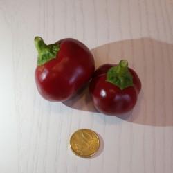 Peperone Tondo Dolce (10 semi)
