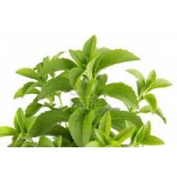 Stevia Rebaudiana Criolla (50 semi) - dolcificante naturale SPEDIZIONE GRATIS