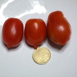 Pomodoro pendolino (80 semi) (raccolta 2014) - pomodorino piennolo spunzillo pendolo