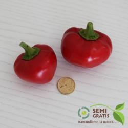 Peperoncino Tondo Bacio di Satana (10 semi) - piccante