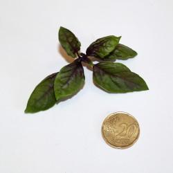 Basilico Violetto (30 semi) - viola