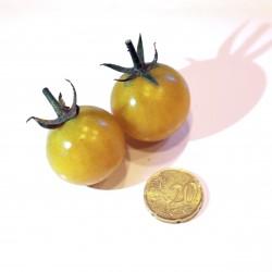 Pomodoro invernale giallo  (30 semi) - pomodori gialli - pomodorino pomodorini