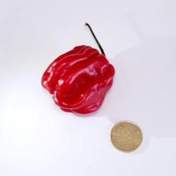 Peperoncino Pimento delle Antille (10 semi) - piccante habanero carribean