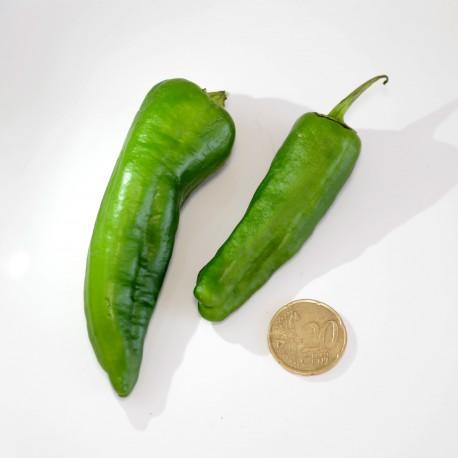 Peperoncino El Padron Verde (10 semi) - piccante - Pimiento de Herbón