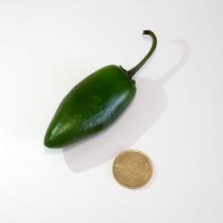 Peperoncino Jalapeno Verde (10 semi) - piccante