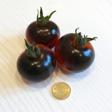 Pomodoro Nero Indigo Rose (20 semi) - pomodorino black