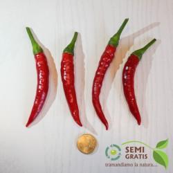 Peperoncino a corno Calabrese (10 semi) - piccante