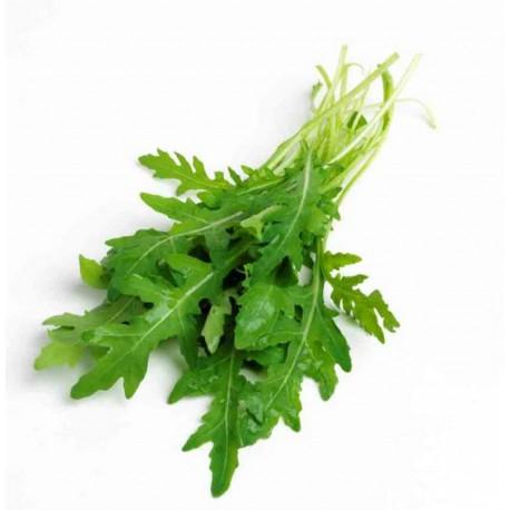 Rucola Coltivata (50 semi)