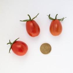 Pomodoro datterino  (20 semi) - pomodorino pomodorini