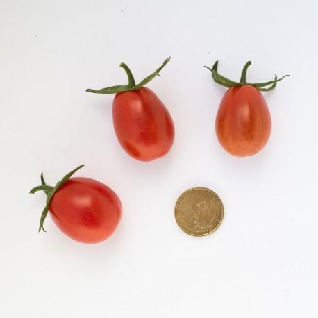 Pomodoro datterino  (30 semi) - pomodorino pomodorini