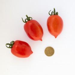 Pomodoro pendolino (20 semi) - pomodorino piennolo spunzillo pendolo