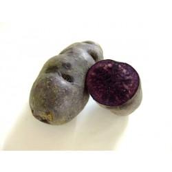 Patate Vitelotte (5 tuberi 2-4 cm) - Viola tartufo