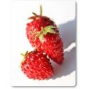 Fragolina di bosco rossa (30 semi) - fragaria vesca - fragoline