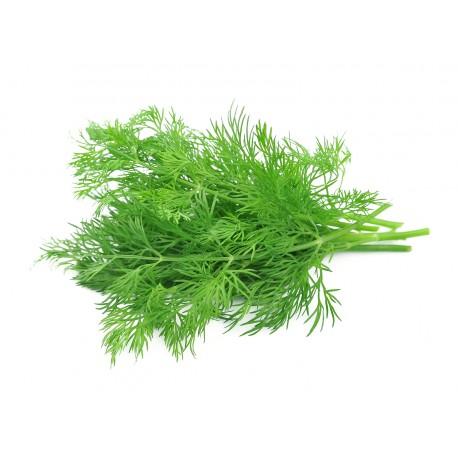 Finocchietto selvatico (50 semi) - finocchio