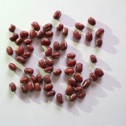 Fagioli Azuki rossi (30 semi) - Vigna angularis