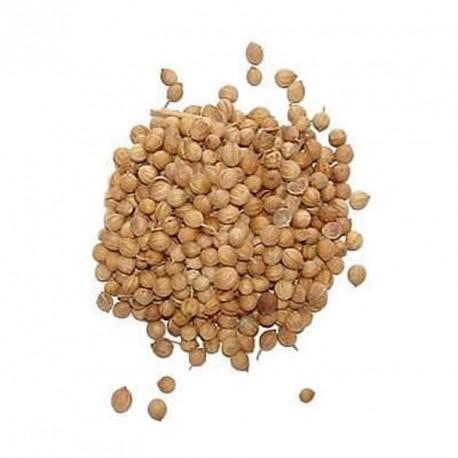 Coriandolo (50 semi) - Coriandrum sativum - prezzemolo cinese