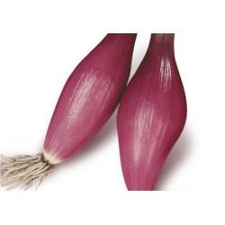 Cipolla rossa lunga (30 semi)